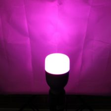Xiaomi Yeelight Smart LED Light Bulb purple