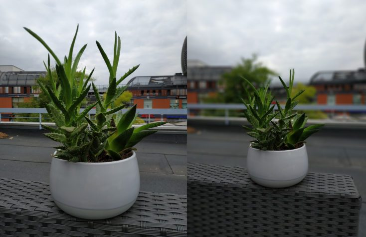 Xiaomi Mi Max 3 test photo plant portrait comparison