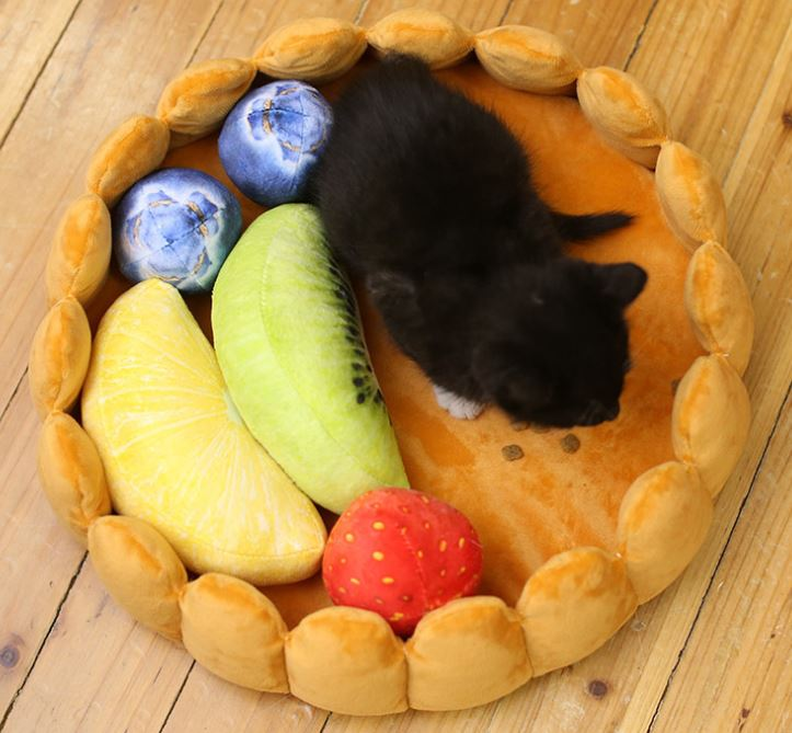 Fruitcake bed cat