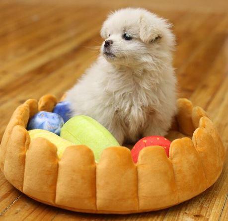 Fruitcake bed
