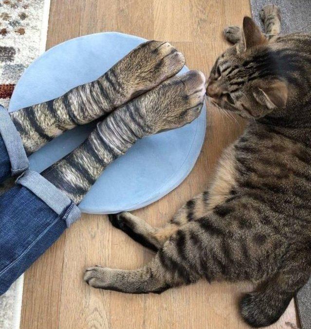 Animal socks cat