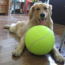 Tennis ball huge