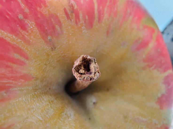 OnePlus 7T macro Apple